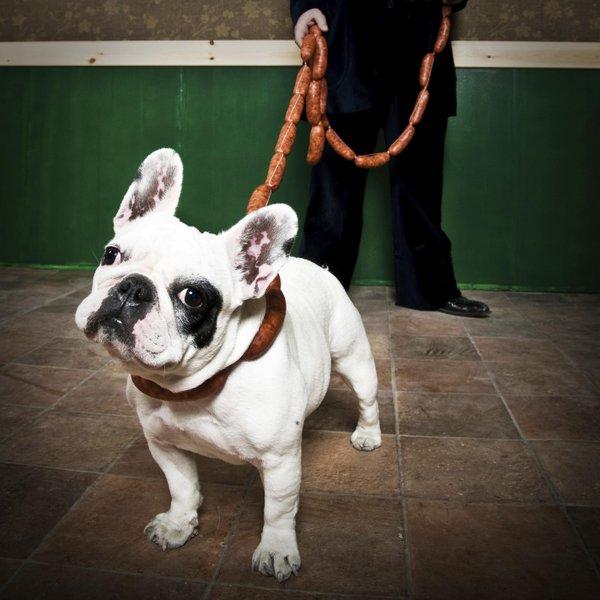 Imagen de la noticia Atar a un perro con chistorra